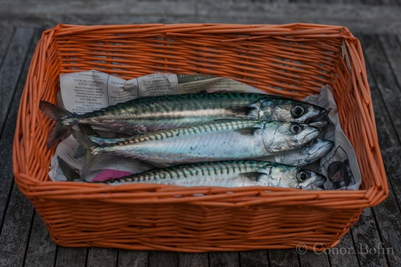 Hot smoked mackerel (1 of 11)