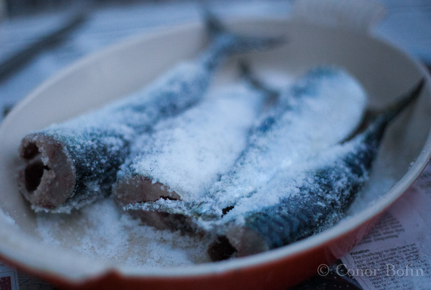 Hot smoked dry brined mackerel you can have too much of for Smoke fish brine